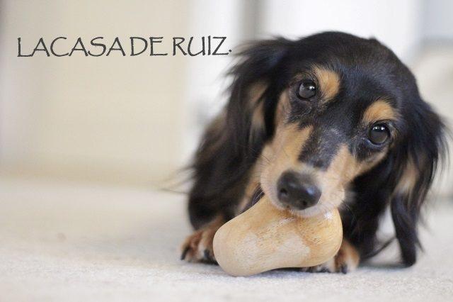 dog&toy